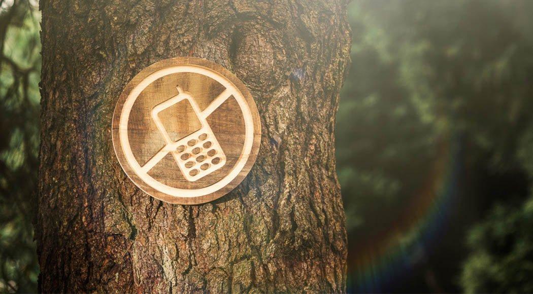 """Digital detox come """"depurare"""" il nostro cervello dal web albero"""